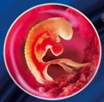 5 неделя беременности женщины