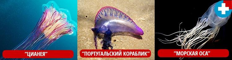 Виды опасных медуз в море и океане