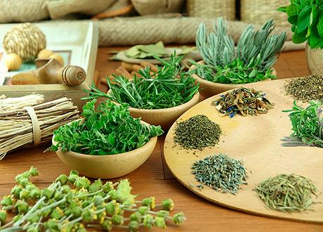 Травы и сборы при васкулите