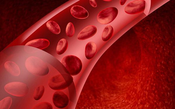 Как течет кровь по венам у человека