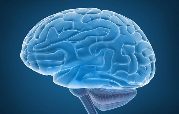 Мозг человека рисунок